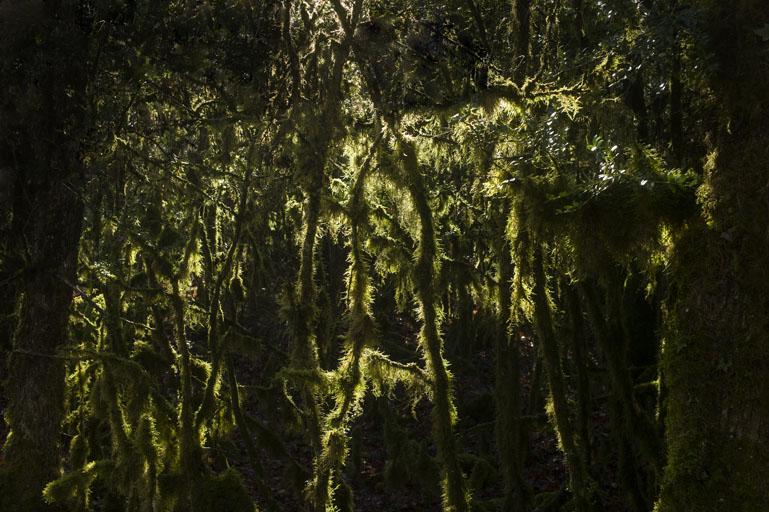 forêt de buis eric morin